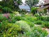 garden ideas along a fence,